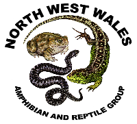 North West Wales Amphibian and Reptile Group (NWWARG)