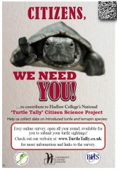 Turtle Tally Poster 2021